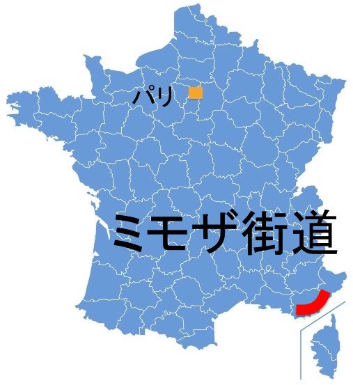 Paris_Mimosa.jpg