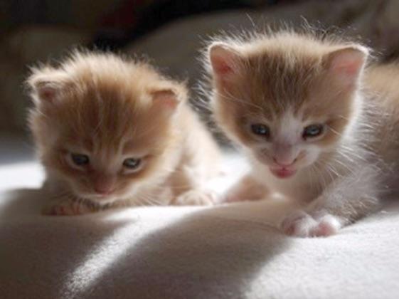 CloudF_cats.jpg